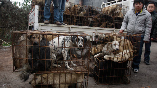 Cat and dog killing in china - Oxy drug forum